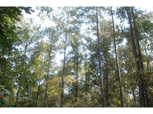 279+/- Acre Twiggs County Land Auction - One Lot Selling Absolute featured photo