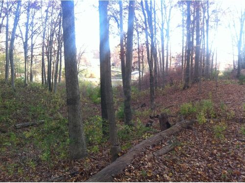 (3) BANK OWNED:  Beautiful LAKEFRONT 1 AC lot on Gov. Bond Lake featured photo