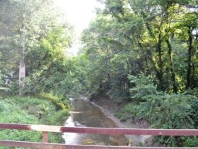 71.82 +/- Acres in Gibson County featured photo 5