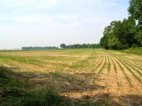 71.82 +/- Acres in Gibson County featured photo 8