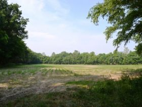 71.82 +/- Acres in Gibson County featured photo 6