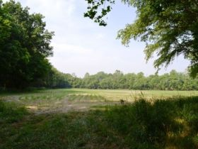 71.82 +/- Acres in Gibson County featured photo 7