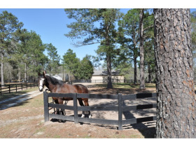 AN EQUESTRIAN JEWEL - Once in a Lifetime Opportunity!!! featured photo 1