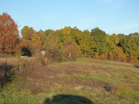 200' X 50' Shop, Mobile home on 14.5 Acres - Offered in 3 Tracts or as a Whole! featured photo 11