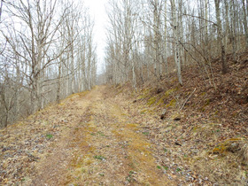 Absolute Ritchie Co. WV Land featured photo 5