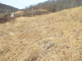 Absolute Ritchie Co. WV Land featured photo 11