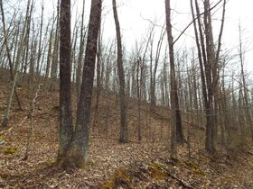 Absolute Ritchie Co. WV Land featured photo 12