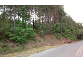 House & 38 Acres± In 3 Tracts (Cullman County) featured photo 10