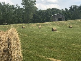 20.39 Acres in 4 Tracts - Limestone, TN featured photo 1