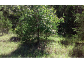 Wooded 15 Acres± To Be Offered As A Whole In Lawrence County featured photo 1