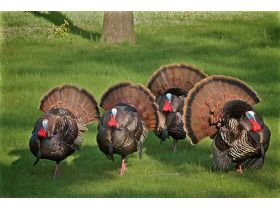 National Wild Turkey Federation Grand National Auction featured photo 1