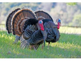 National Wild Turkey Federation Grand National Auction featured photo 2