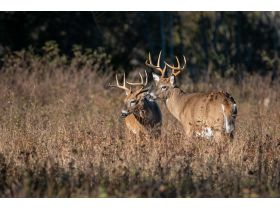 National Wild Turkey Federation Grand National Auction featured photo 7