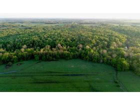 220 Ac. +/- In Beautiful Southwest Missouri - Pasture & Timber With Several Buildings, Being Offered In Three Tracts & Sells With No Reserve or Minimum featured photo 11