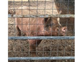 Parker County Impounded Livestock Auction - Online Only featured photo 2