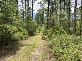 Sweetwater Fox Pen Tract | 670± Acres featured photo 5