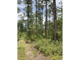 Sweetwater Fox Pen Tract | 670± Acres featured photo 6