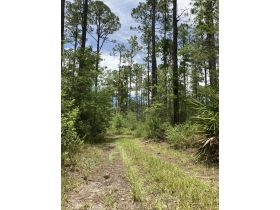 Sweetwater Fox Pen Tract | 670± Acres featured photo 7