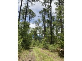 Sweetwater Fox Pen Tract | 670± Acres featured photo 8
