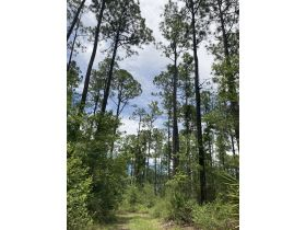Sweetwater Fox Pen Tract | 670± Acres featured photo 9