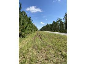 Sweetwater Fox Pen Tract | 670± Acres featured photo 10