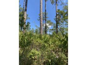 Sweetwater Fox Pen Tract | 670± Acres featured photo 12
