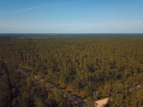 Sweetwater Fox Pen Tract | 670± Acres featured photo 3