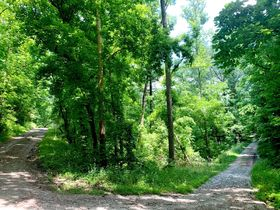 AUCTION Selling Absolute - 4 Center Hill Lake Lots Selling Together - Corner of Easy St & Holiday Haven Dr featured photo 2