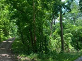 AUCTION Selling Absolute - 4 Center Hill Lake Lots Selling Together - Corner of Easy St & Holiday Haven Dr featured photo 12