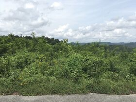 AUCTION Selling ABSOLUTE! 3.38+/- Acres in Chapel Hill Subdivision For Sale with Utilities Available - Near Center Hill Lake at Coconut Ridge Rd. featured photo 8