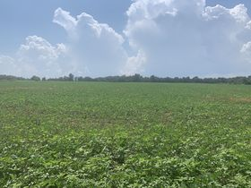 Corydon 34+ Acre Land Online Only Auction featured photo 10