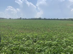 Corydon 34+ Acre Land Online Only Auction featured photo 11