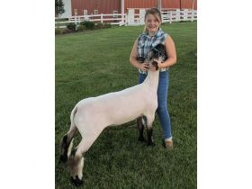 MEADE COUNTY FAIR 4-H & FFA YOUTH LIVESTOCK AUCTION - Online Bidding ends Wednesday, July 22 @ 5:00 PM EDT featured photo 2