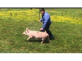 MEADE COUNTY FAIR 4-H & FFA YOUTH LIVESTOCK AUCTION - Online Bidding ends Wednesday, July 22 @ 5:00 PM EDT featured photo 5