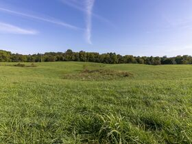 301 Acre Corydon Real Estate Online Only Auction featured photo 5