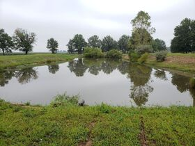 11 ACRE Real Estate and Personal Property Auction - Taylorville, IL featured photo 7
