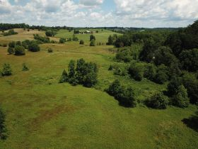 Approximately 93 Acres (Offered in 3 Tracts) of the Late Jerry Dotson at On Site Estate Auction featured photo 8