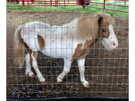 Parker County Impounded Livestock Auction - Online Only featured photo 3