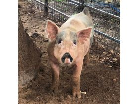 Parker County Impounded Livestock Auction - Online Only featured photo 5
