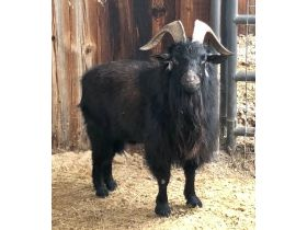 Parker County Impounded Livestock Auction - Online Only featured photo 6