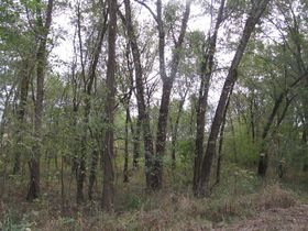 Nice Affordable Tract Of Hunting Land featured photo 1