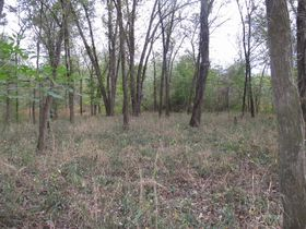 Nice Affordable Tract Of Hunting Land featured photo 2