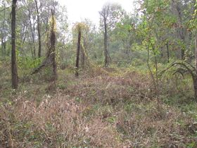 Nice Affordable Tract Of Hunting Land featured photo 3