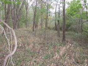 Nice Affordable Tract Of Hunting Land featured photo 4