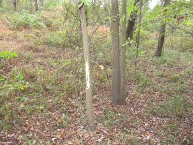Nice Affordable Tract Of Hunting Land featured photo 5