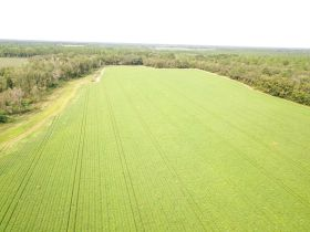 97 ± Acres | Offered Divided | Sportsman's Paradise featured photo 8