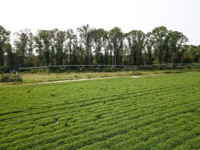 97 ± Acres | Offered Divided | Sportsman's Paradise featured photo 4