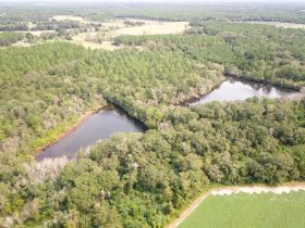 97 ± Acres | Offered Divided | Sportsman's Paradise featured photo 11