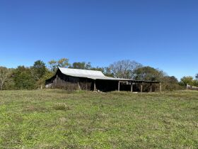 AUCTION featuring 450+/- Acres Offered in Large Tracts in Rockvale, TN - Newman Road featured photo 5
