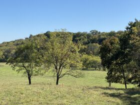 AUCTION featuring 450+/- Acres Offered in Large Tracts in Rockvale, TN - Newman Road featured photo 10